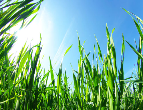 Avoid this common lawn care mistake this spring!
